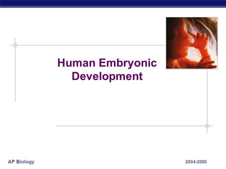 AP Biology 2004-2005 Human Embryonic Development.