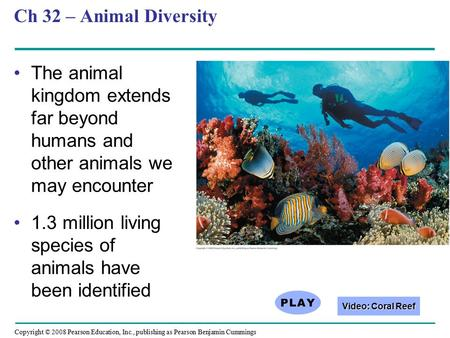 Copyright © 2008 Pearson Education, Inc., publishing as Pearson Benjamin Cummings Ch 32 – Animal Diversity The animal kingdom extends far beyond humans.