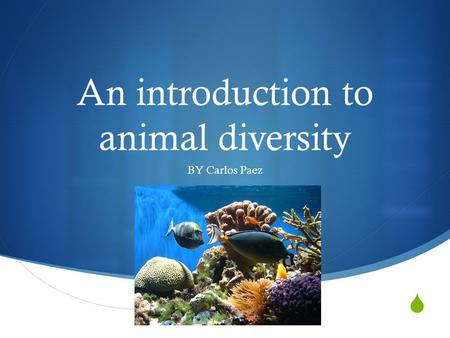  An introduction to animal diversity BY Carlos Paez.
