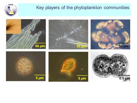 Key players of the phytoplankton communities 5 µm 50 µm 0.5 µm50 µm.