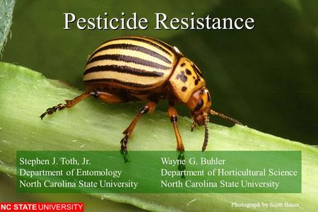 Pesticide Resistance Photograph by Scott Bauer. Stephen J. Toth, Jr.Wayne G. Buhler Department of EntomologyDepartment of Horticultural ScienceNorth Carolina.