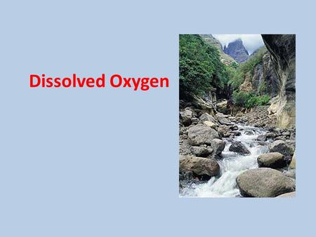 Dissolved Oxygen. CO 2 O2O2 Aquatic plants and phytoplankton (single cell floating plants) release oxygen into the water as a product of photosynthesis.