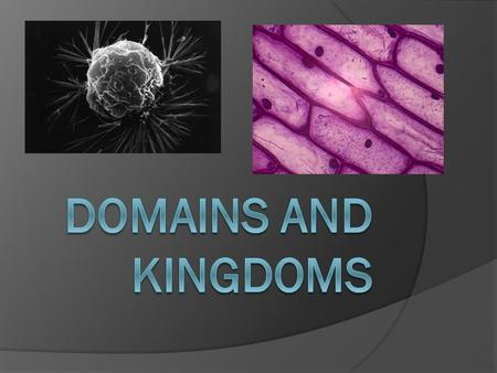 3 Domains Everything that is living Archae Eukarya Bacteria.