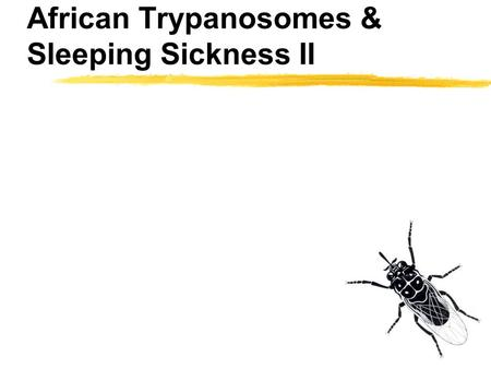 African Trypanosomes & Sleeping Sickness II. Sleeping Sickness and Trypanosomes I zLife cycle and biology of trypanosomes zSleeping sickness, differences.