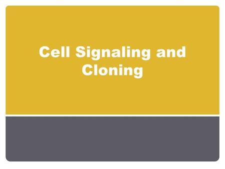 "Cell Signaling and Cloning. How do cells differentiate? Determination 1. When a cell ""chooses"" a particular fate. 2. Happens via cell signaling or asymmetrical."