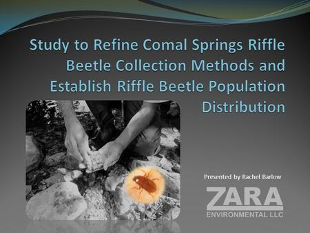 Presented by Rachel Barlow. According to the EAA Request for Proposals (RFP) for this study: Comal Springs riffle beetle (CSRB) distribution is currently.