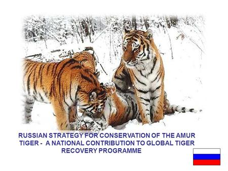 1 RUSSIAN STRATEGY FOR CONSERVATION OF THE AMUR TIGER - A NATIONAL CONTRIBUTION TO GLOBAL TIGER RECOVERY PROGRAMME.