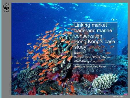 © Cat Holloway / WWF-Canon 16 October 2015 - 1 Solutions for a Living Planet Linking market trade and marine conservation: Hong Kong's case study Allen.