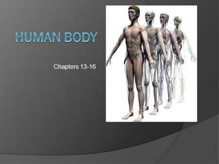Human Body Chapters 13-16.