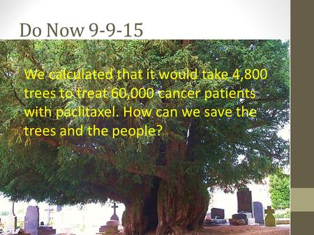 Do Now 9-9-15 We calculated that it would take 4,800 trees to treat 60,000 cancer patients with paclitaxel. How can we save the trees and the people?