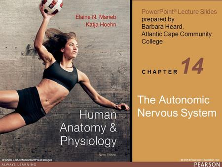 Human <strong>Anatomy</strong> & <strong>Physiology</strong> Ninth Edition PowerPoint ® Lecture Slides prepared by Barbara Heard, Atlantic Cape Community College C H A P T E R 14 © 2013.