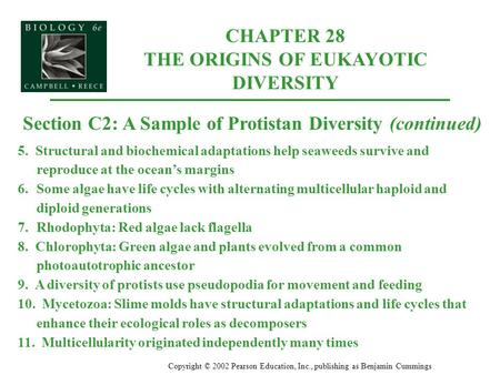 CHAPTER 28 THE ORIGINS OF EUKAYOTIC DIVERSITY Copyright © 2002 Pearson Education, Inc., publishing as Benjamin Cummings Section C2: A Sample of Protistan.
