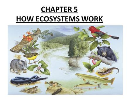 CHAPTER 5 HOW ECOSYSTEMS WORK. Chapter 5 - section 3 How Ecosystems Change ECOSYSTEMS ARE CONSTANTLY CHANGING!!!