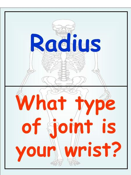 Radius What type of joint is your wrist?. Condyloid What function of the skeleton starts with B?