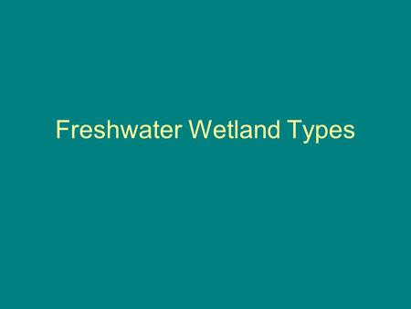 Freshwater Wetland Types. Shallow Open Water Hydrology Generally have water depths of less than 6.6 feet (2 meters) Ponds, river oxbows, shallow bay.