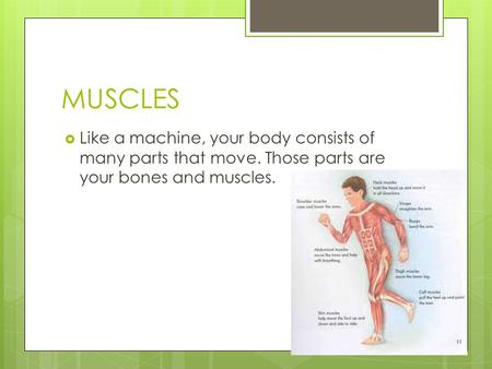 MUSCLES  Like a machine, your body consists of many parts that move. Those parts are your bones and muscles.
