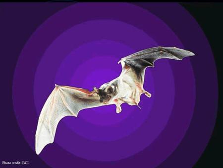 Photo credit: BCI. Going Bats A Classroom Lesson From the Mathematics & Science Center.