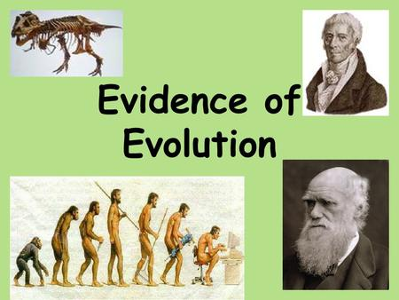 Evidence of Evolution. 1.Fossil Record 2.Homologous Body structures 3.Similarities in Embryology 4.Biochemical Evidence.