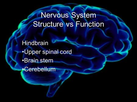 Nervous System Structure vs Function Hindbrain Upper spinal cord Brain stem Cerebellum.