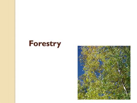 Forestry. Coniferous: cone bearing trees that keep their leaves all year round. Examples include Spruce and Pine. Coniferous trees account for 63% of.
