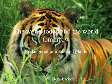 The world today and the world tomorrow Endangered animals and plants Dora Lacković, 7.b.