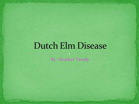 By: Heather Varady. Dutch Elm Disease is caused by a fungus Ophiostoma novo-ulmi. Discovered by 7 women scientists in 1917 in Holland. It's place of origin.