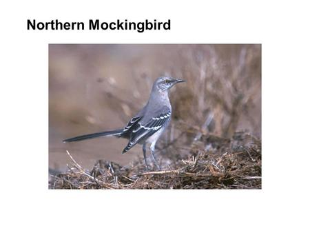 Northern Mockingbird. Copyright © 2002 OSI Software, Inc. All rights reserved. PI OLE DB COM Connector Making Relational Databases Look Like PI Benny.