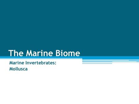 The Marine Biome Marine Invertebrates: Mollusca. Clams Mussels Snails Octopus Squid.