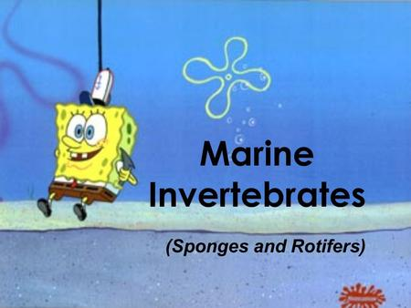 Marine Invertebrates (Sponges and Rotifers). Sponges 1.Sponges are multi-cellular, and come in many sizes, colors, and shapes. 2.Sponges have few specialized.