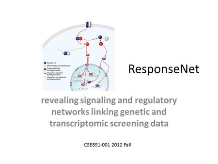 ResponseNet revealing signaling and regulatory networks linking genetic and transcriptomic screening data CSE891-001 2012 Fall.
