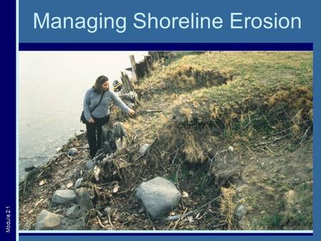 Managing Shoreline Erosion Module 2:1. Erosion: A Natural Process  Proceeds very slowly  Important part of ecosystem function Courtesy of: Ed Klekowski.