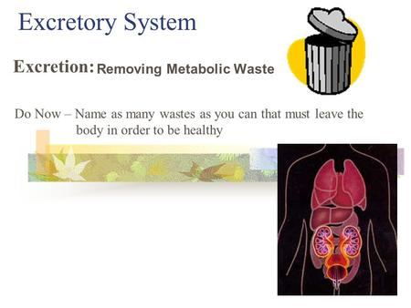 Excretory System Removing Metabolic Waste Excretion: Do Now – Name as many wastes as you can that must leave the body in order to be healthy.