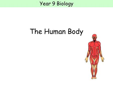 Year 9 Biology The Human Body. Year 9 Biology Cells, tissues, organs Organsims are made of cells A group of similar cells is called a tissue A group of.