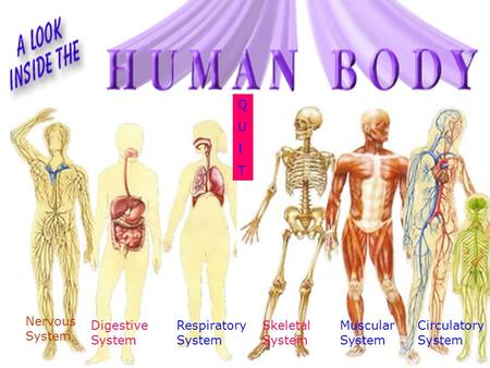 Digestive System Circulatory System Skeletal System Respiratory System Nervous System Muscular System QUITQUIT.
