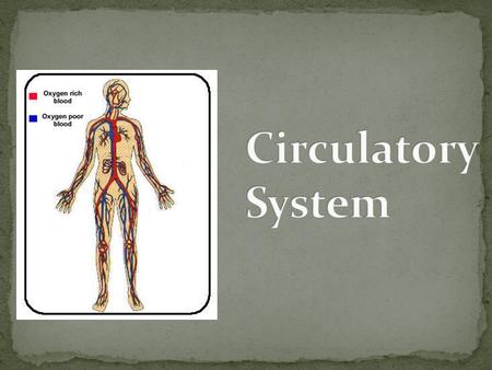 At this station you will: Learn the 3 main functions of the cardiovascular system. Learn the main parts of the cardiovascular system. Determine how much.