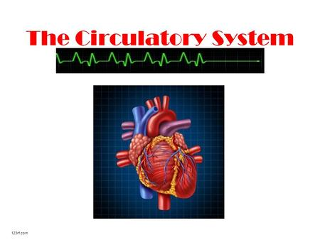 The Circulatory System 123rf.com. Where is your heart located? Many people think their heart is located on the left side of their chest. It is actually.