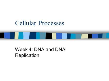 Cellular Processes Week 4: DNA and DNA Replication.