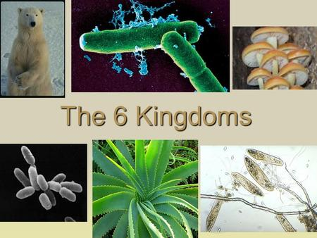 The 6 Kingdoms. Classification  Domain (recent addition)-Kingdom- Phylum - Class- Order- Family- Genus- Species  3 Domains Archaea Archaea Bacteria.