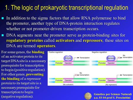 Genetica per Scienze Naturali a.a. 03-04 prof S. Presciuttini 1. The logic of prokaryotic transcriptional regulation In addition to the sigma factors that.