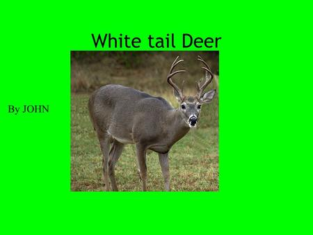 White tail Deer By JOHN White tail deer have a white tail and white all underneath their body.Deer's have brown fear.Buck's have antlers on their head.A.