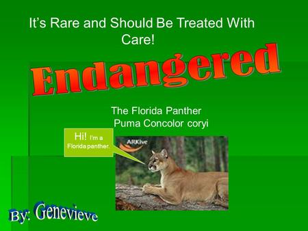 It's Rare and Should Be Treated With Care! The Florida Panther Puma Concolor coryi Hi! I'm a Florida panther.