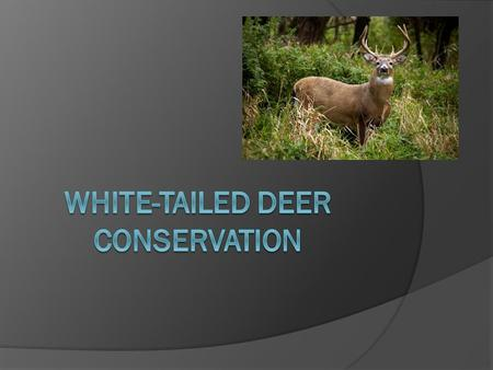 White-tail Deer Season  Opening Day is in less than two weeks.  Hunting White-tail deer prevents their extinction in PA.  What do you think of that.