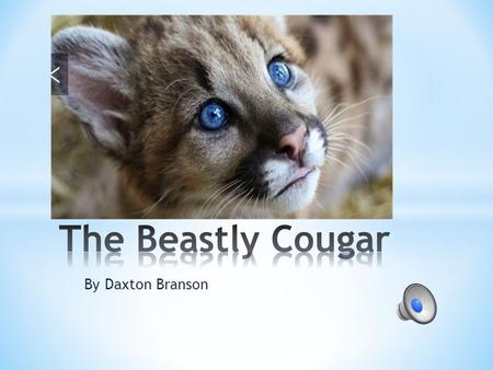 By Daxton Branson * Cougars live in semi arid areas. * Subtropical areas. * And tropical forests.