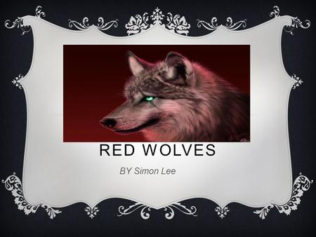 RED WOLVES BY Simon Lee. BASIC FACTS  A RED WOLF IS A MAMMAL.  IT LIVES FOR 10-12 YRS.  IT IS 4 FEET LONG.  HAS 4 SHARP TEETH.  HAS BUSHY TAIL 