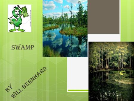 Swamp By Will Bernhard. Swamp definition  SWAMP  Warm, wet, areas that are teeming with animal and plant life.