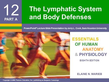 ELAINE N. MARIEB EIGHTH EDITION 12 Copyright © 2006 Pearson Education, Inc., publishing as Benjamin Cummings PowerPoint ® Lecture Slide Presentation by.