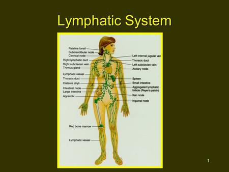 1 Lymphatic System. 2 Functions Return fluid to general circulation Production of WBCs Immunity.