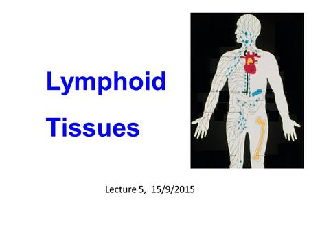 Lymphoid Tissues Lecture 5, 15/9/2015. Peripheral or Secondary Lymphoid Tissues Lymph nodes Spleen Mucosal lymphoid tissues (MALT)