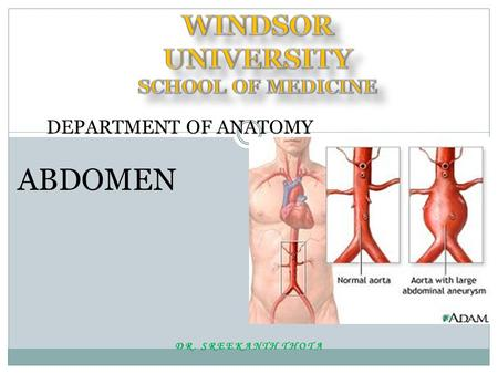 DR. SREEKANTH THOTA DEPARTMENT OF ANATOMY ABDOMEN.