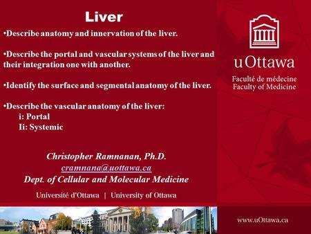Liver Christopher Ramnanan, Ph.D. Dept. of Cellular and Molecular Medicine Describe anatomy and innervation of the liver. Describe.
